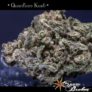 Quantum Kush- Cannabis Macro Photography by Spurs Broken (Robert R. Sanders)