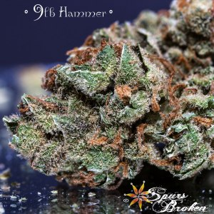 9 lb. Hammer - Cannabis Macro Photography by Spurs Broken (Robert R. Sanders)