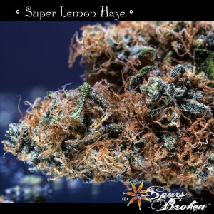 Super Lemon Haze - Cannabis Macro Photography by Spurs Broken (Robert R. Sanders)
