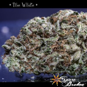 The White - Cannabis Macro Photography by Spurs Broken (Robert R. Sanders