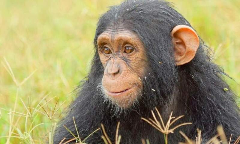Sudhir Gives Birth To Chimpanzee, Names It Ruparelia!
