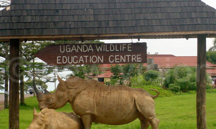 American National commits Suicide at Entebbe Zoo