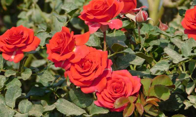 Ruparelia Group Breaks Record As First UG Company To Export Flowers To China