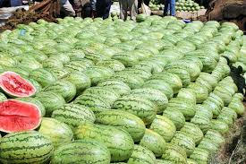 Farmers Guide With Joseph Mugenyi: Tips On Growing Watermelon