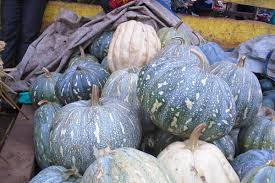 Farmers' Guide With Joseph Mugenyi: Tips On How To Grow Pumpkins
