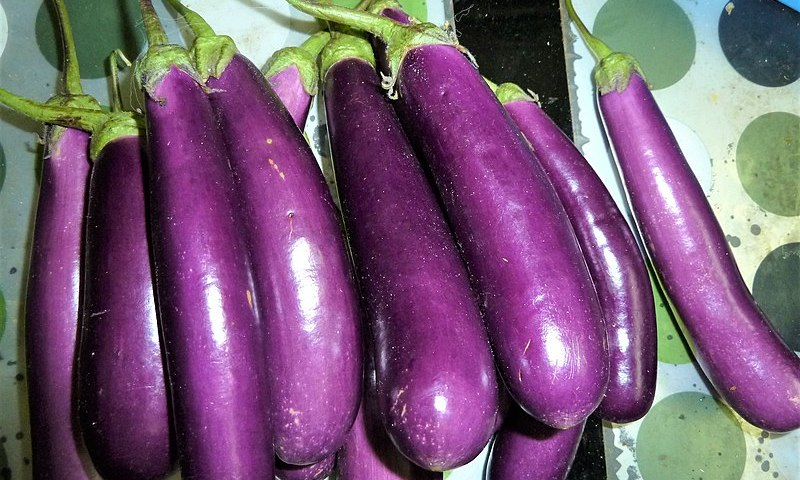 Farmers' Guide With Joseph Mugenyi: Tips On How To Grow Eggplants