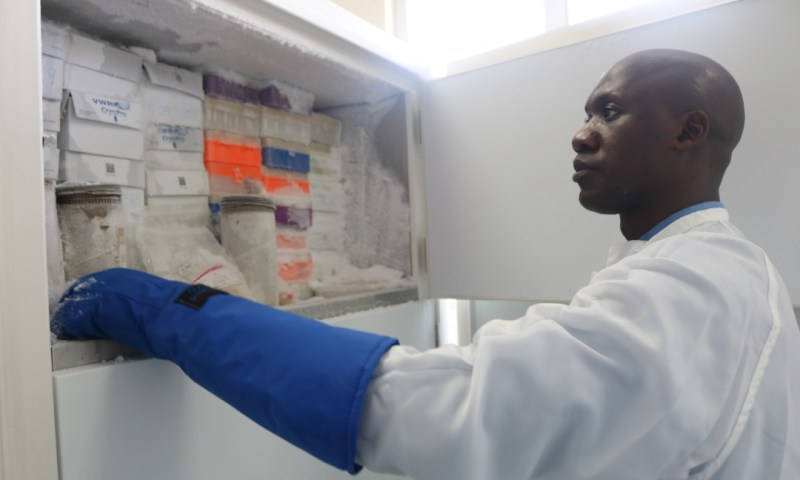 New Research points to use of genes to detect progression of HIV into AIDS
