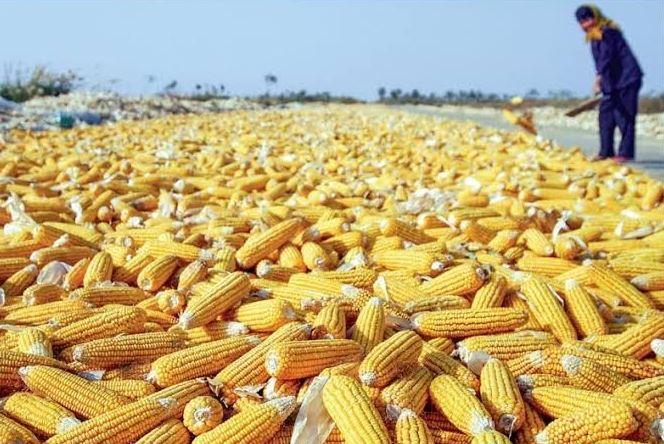 MPs Call For Retaliation Against Kenya For Banning Ugandan Maize