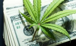 Bury Ignorance & Boost Economy! Here Is Why Uganda Should Swiftly Legalize Cannabis Growing