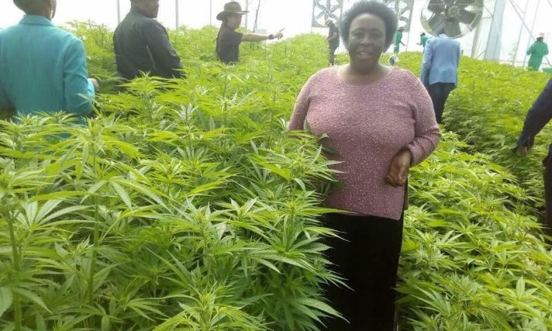 Cannabis & Money: An Insider Look Into This Multi-Billion Dollar Business That Uganda Has Continuously Ignored