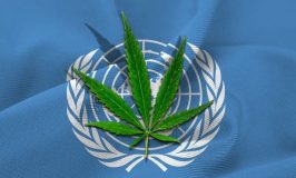 UN Removes Medical Cannabis From List Of Dangerous Drugs
