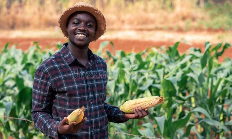 "New Farming ""Ecosystem"" In Uganda Empowers Small Holders"