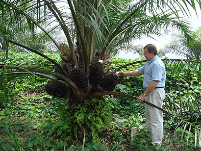 Uganda Targets Doubling Palm Oil Production With Second Estate