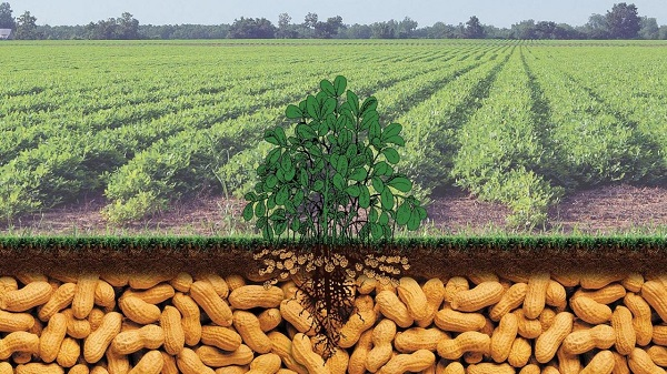 Farmer's Guide: Grow & Reap Big From G.nuts Framing