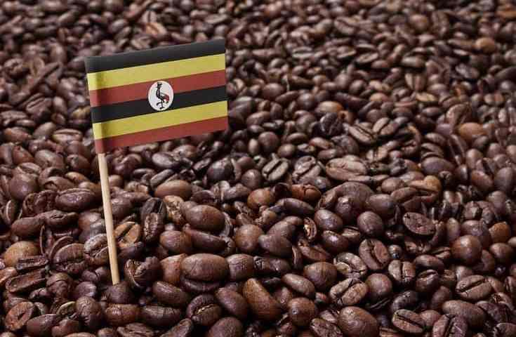 Uganda Coffee Exports Shoot To 35%, Now Ranked 7th Among Top Global Producers