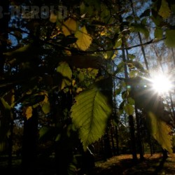 Herbst_pa095979