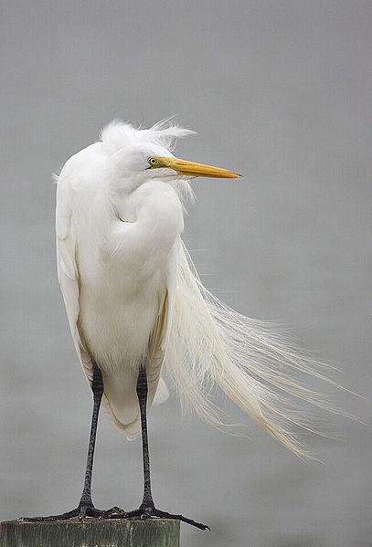 كلمة السر اجابة سؤال طيور مكونه من عشر حروف