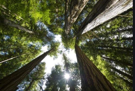 https://i1.wp.com/www.squamishreporter.com/wp-content/uploads/2021/03/forest.jpg?fit=540%2C364&ssl=1