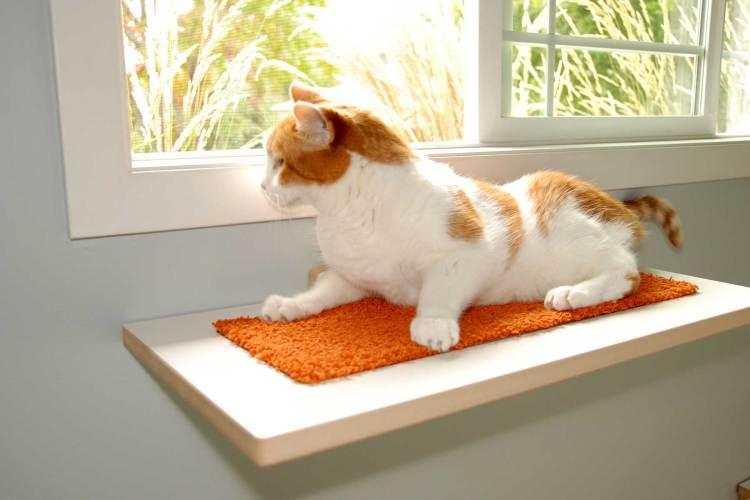 White and orange cat on modern cat window perch
