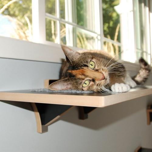 FREMONT: MODERN CAT WINDOW PERCH