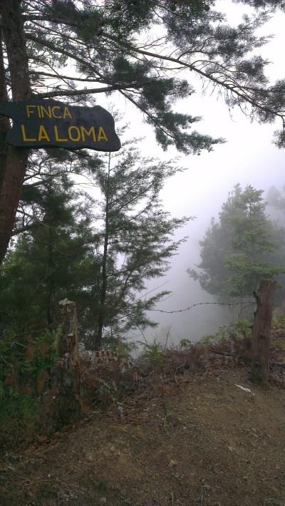 Foggy La Loma