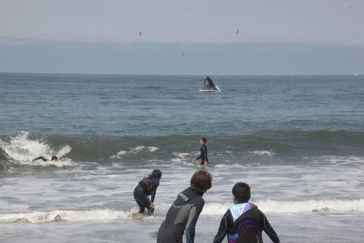 Whale-SurfCamp2014-08