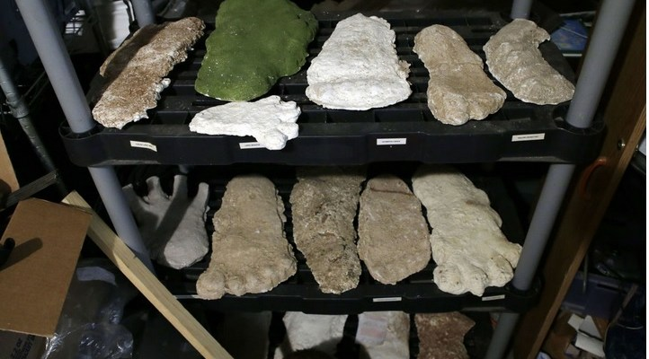"Plaster casts of footprints and handprints that some think were left by an undocumented species of animal collectively known as ""Bigfoot"" have been made over the years. TULSA WORLD FILE"