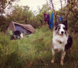 najin kamp pred Vicaniji