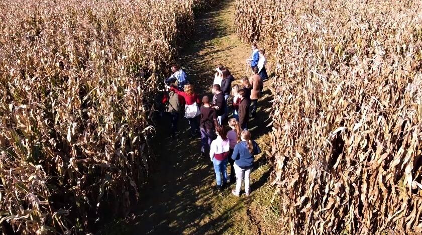 [VIDEO] Neki za laptop, neki u polje: Na ovom studiju dio nastave je i – branje kukuruza