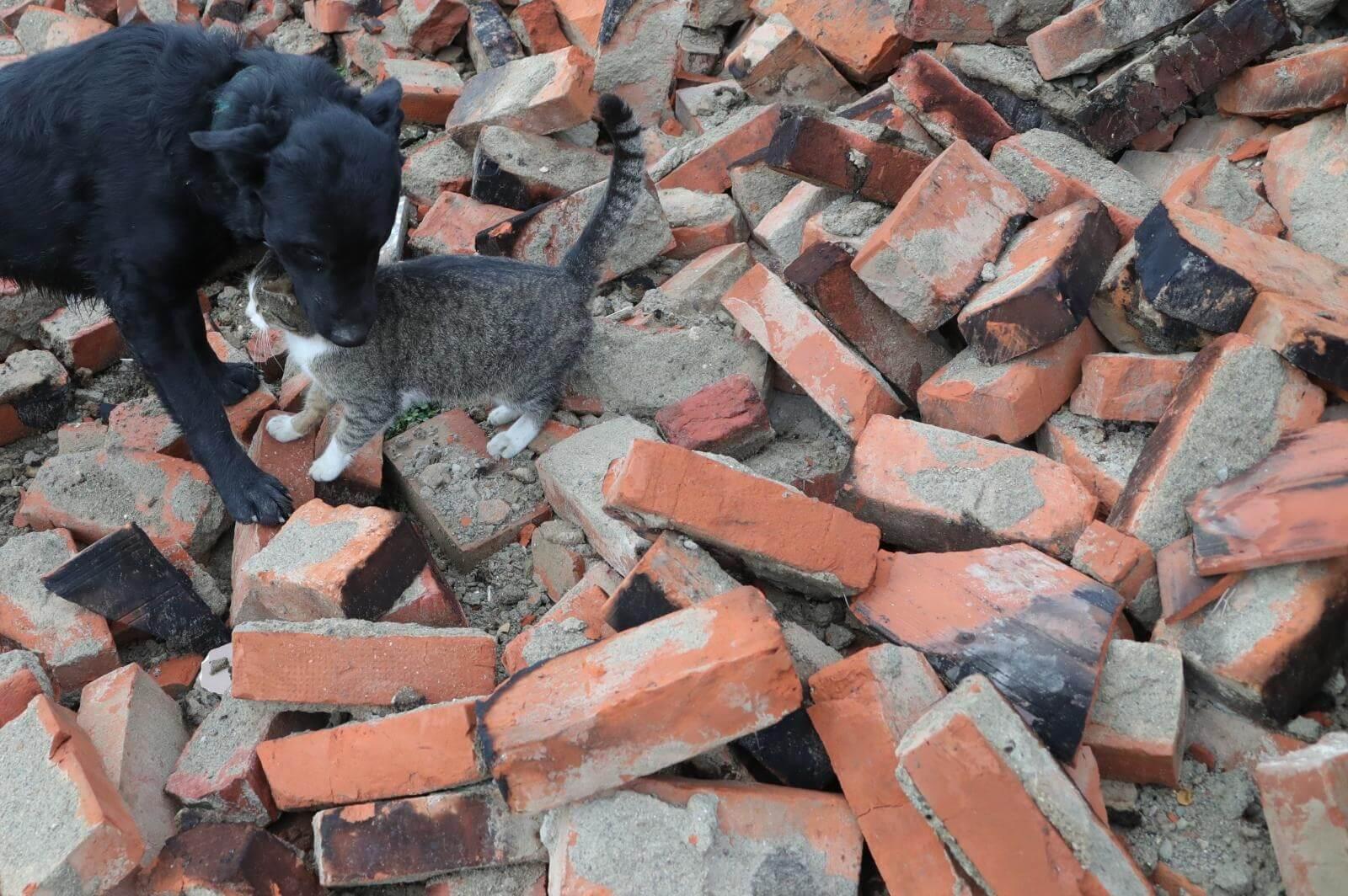 Veterinarski fakultet uključio se u zbrinjavanje stradalih životinja na područjima koje je pogodio potres