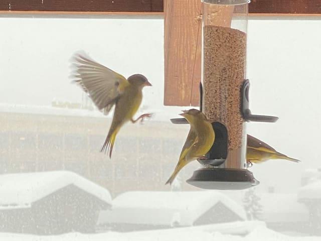 Birds at a feeding station.