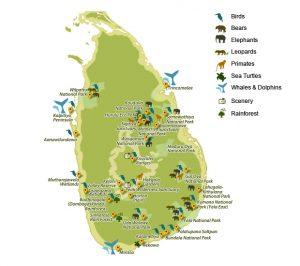 Wildlife of Sri Lanka sri lankan riders