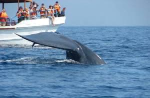 whale dolphin sri lankan riders
