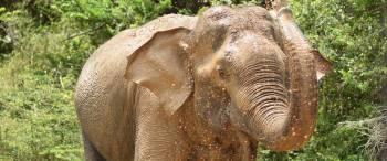 Elephants Safari