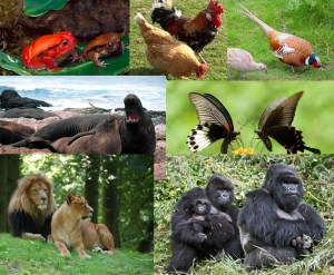 animalsex