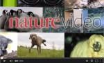 Nature Video 2014