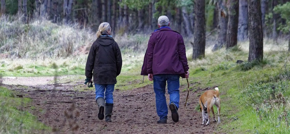 dog walking dogs pet walk animal walking dog, brisk walking, older adults,
