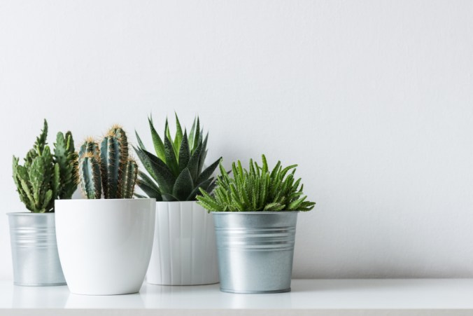 group of potted indoor plants