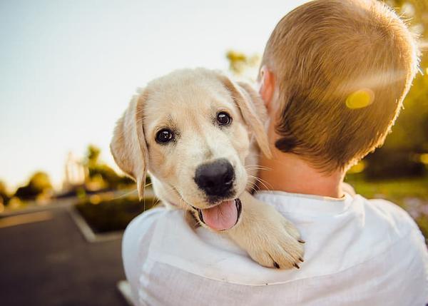 Navidad: ¡Quiero un perro!
