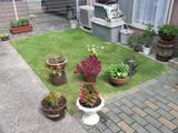 浜松・自宅の庭