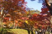 2014年11月24日・修善寺虹の郷の紅葉