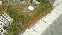 土を留めてあったブロックを取り除きました