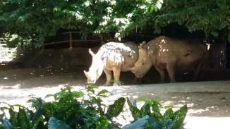 02.08.2015 Lo zoosafari