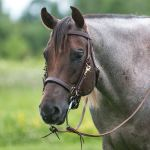 Billy Royal Deluxe Trail Halter Bridle Combo Schneiders Saddlery