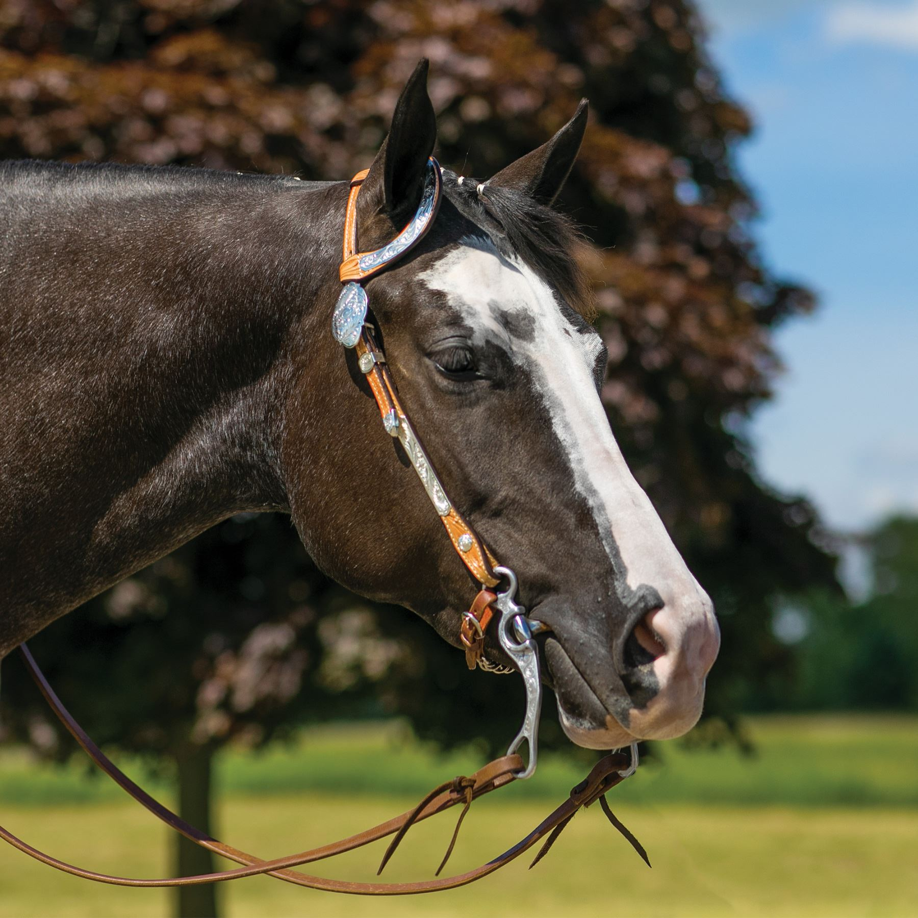 Billy Royal Northampton Classic One Ear Headstall In Show