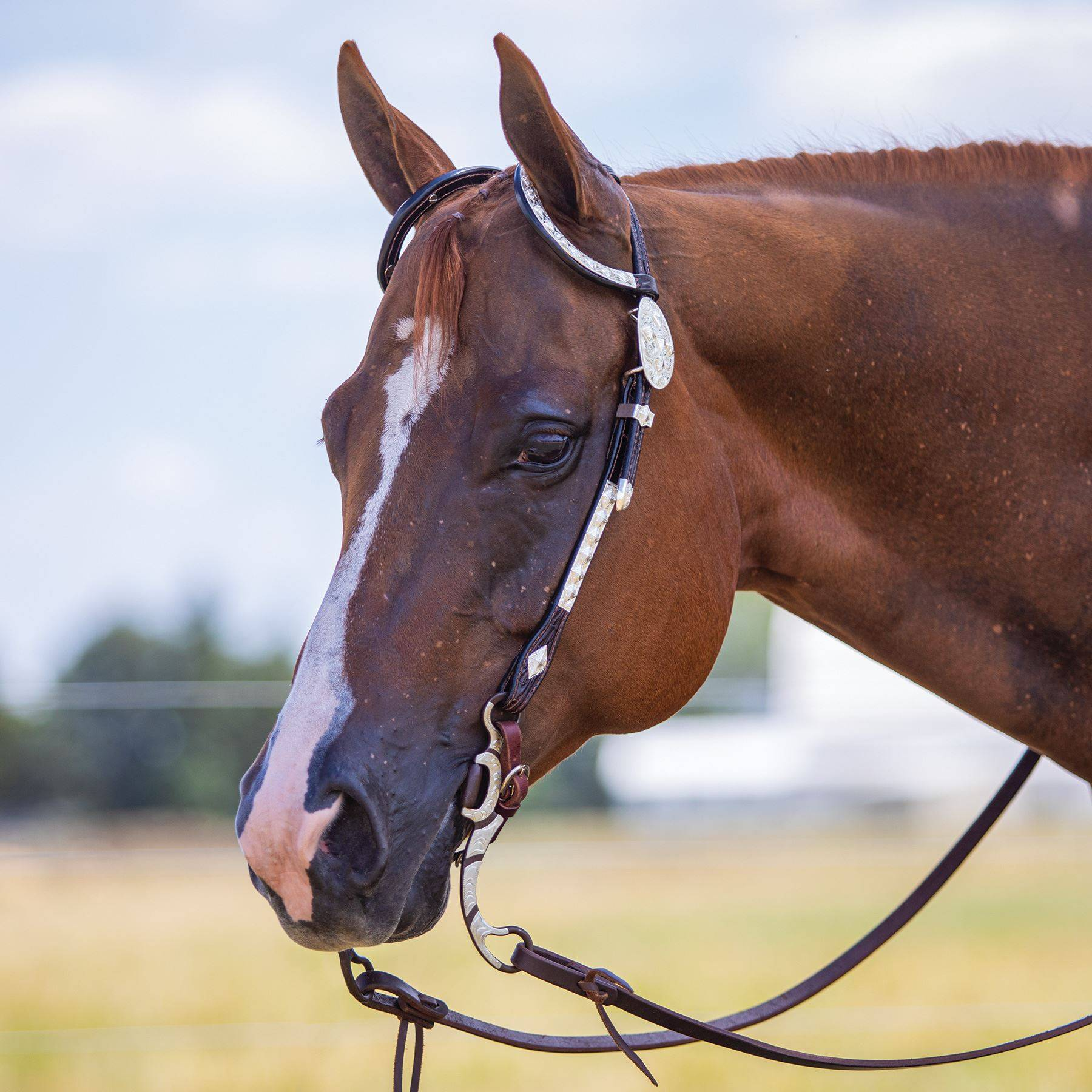 Billy Royal Double Diamond Two Ear Headstall In Show At