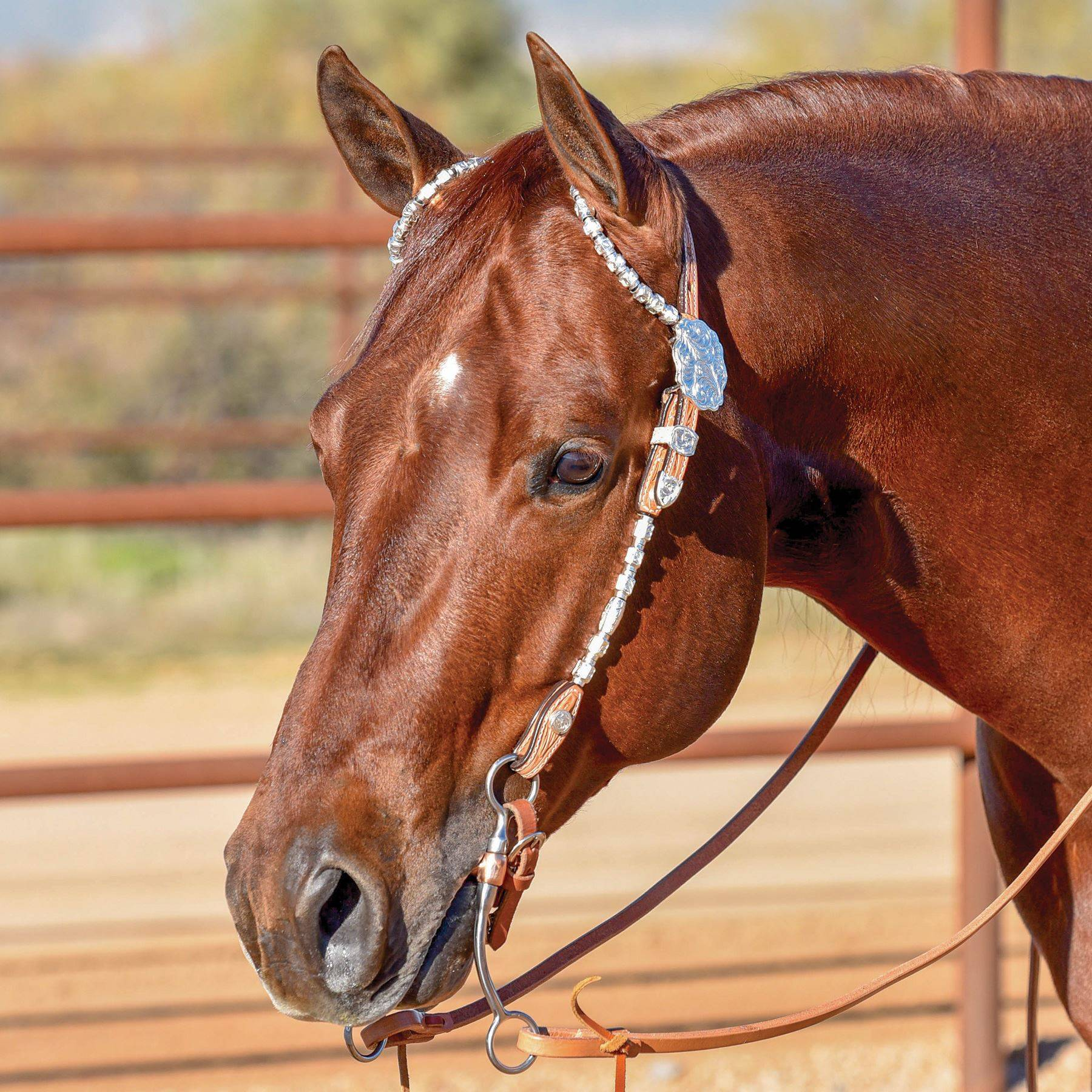Double S Award Show Headstall In Show At Schneider Saddlery