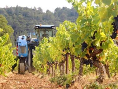 machine à vendanger dans les vignes du château st eutrope