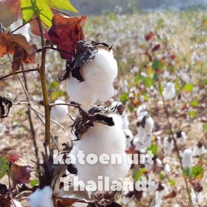 katoen uit Thailand