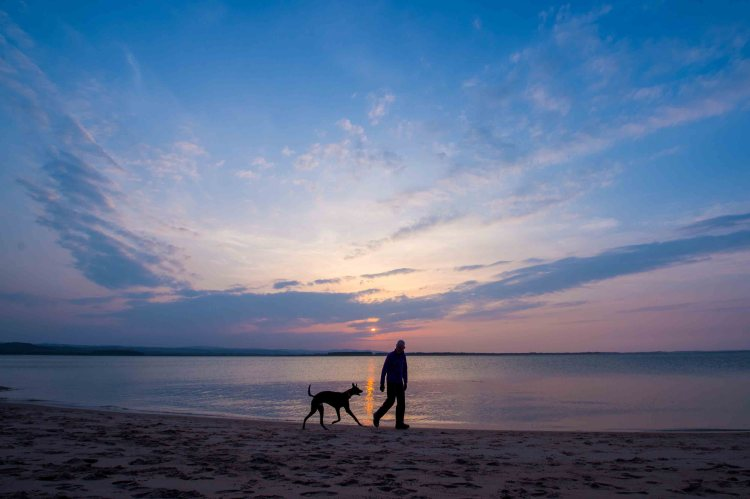 Pet-friendly coastal holidays in Budle Bay